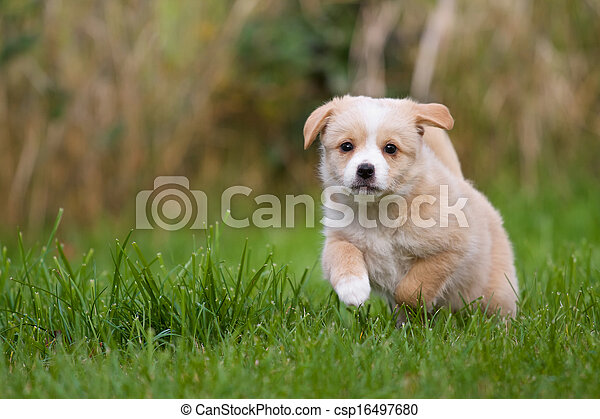 läufe, junger hund - csp16497680