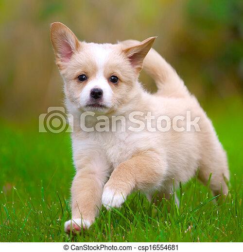 läufe, junger hund - csp16554681