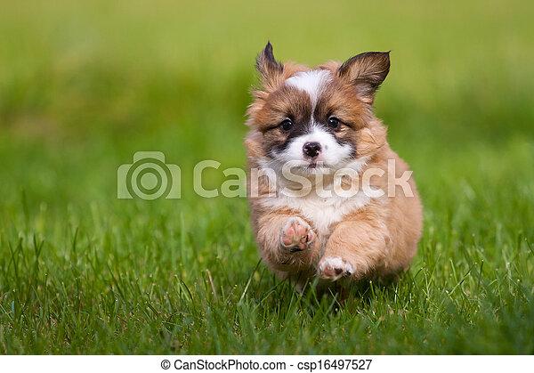 läufe, junger hund - csp16497527