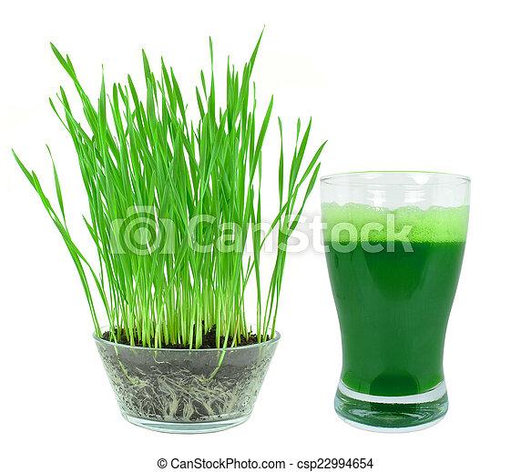 lé, wheatgrass - csp22994654