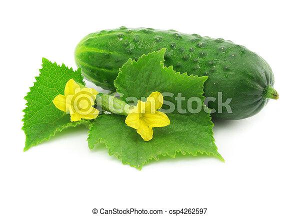 légume, vert, fruit, concombre, isolé - csp4262597