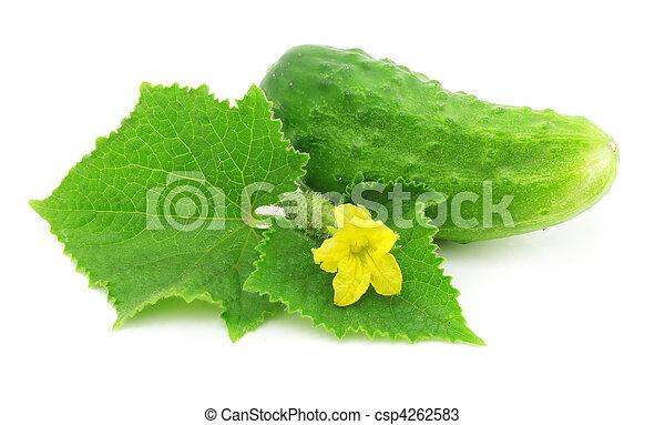légume, vert, fruit, concombre, isolé - csp4262583