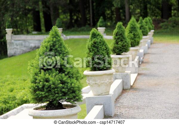 L nea jard n enano pino p blico enano gardens for Tipos de pinos para jardin fotos