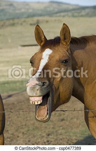 ló, nevető - csp0477389
