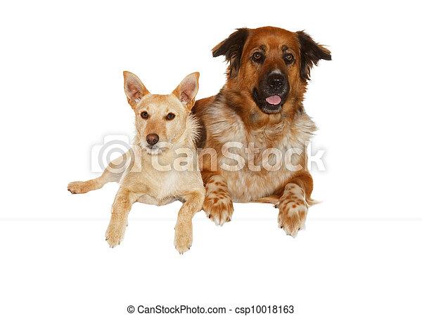 lögnaktig, partnerer, hund, vaken, sida - csp10018163