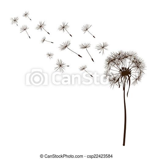 Dandelions - csp22423584