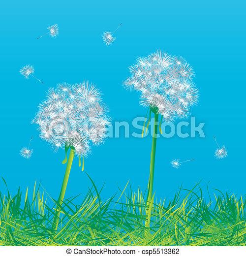 Dandelions - csp5513362