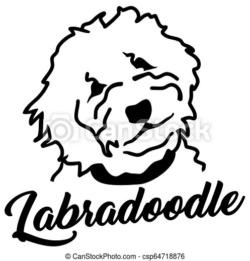 Labradoodle head silhouette with name - csp64718876