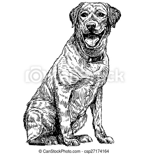 Labrador Retriever - csp27174164