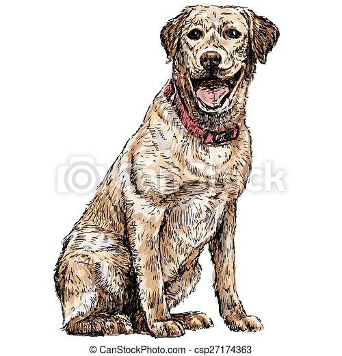 Labrador Retriever - csp27174363