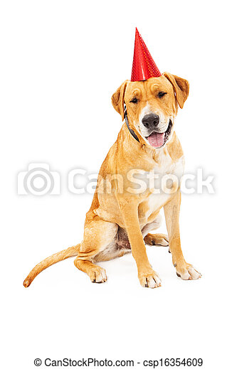 Labrador Retriever Dog Wearing Birthday Hat