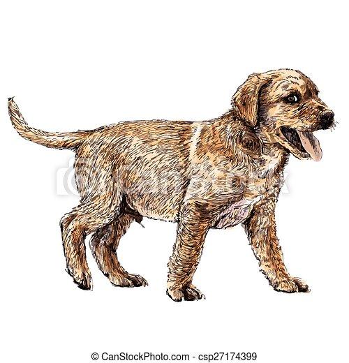 Labrador Retriever - csp27174399