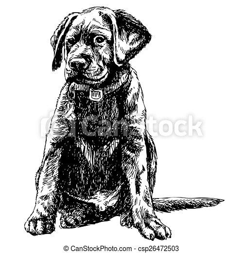 Labrador Retriever - csp26472503