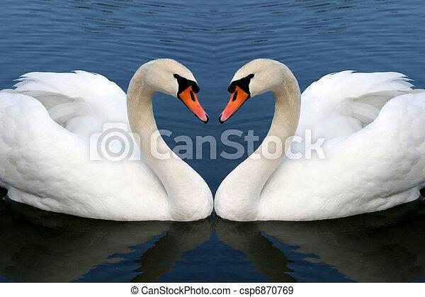 labuť, láska - csp6870769