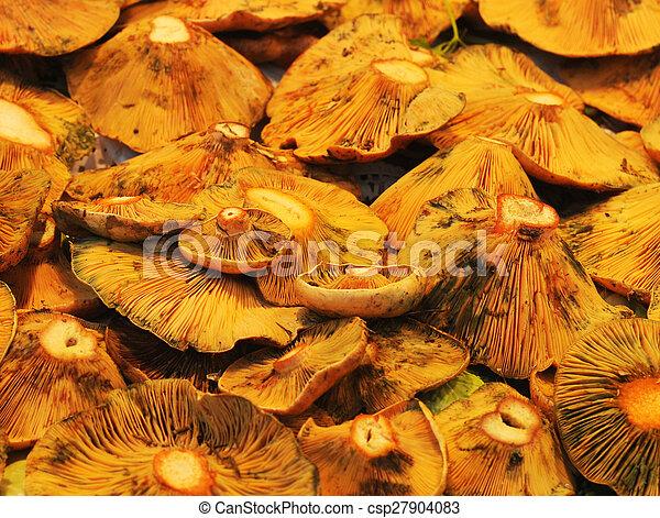 lactarius deliciosus or saffron milk cap - csp27904083