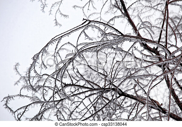 Lacy Frosty Branches - csp33138044