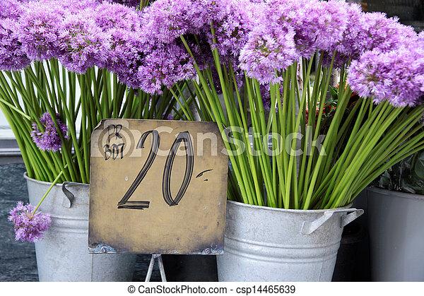 laden, purpurne blumen, blume - csp14465639