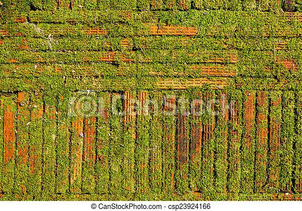 Moss en el suelo de ladrillo o fondo de textura de pared. - csp23924166