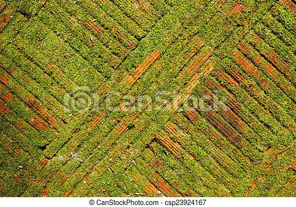 Moss en el suelo de ladrillo o fondo de textura de pared. - csp23924167