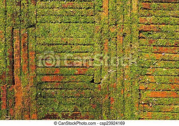 Moss en el suelo de ladrillo o fondo de textura de pared. - csp23924169