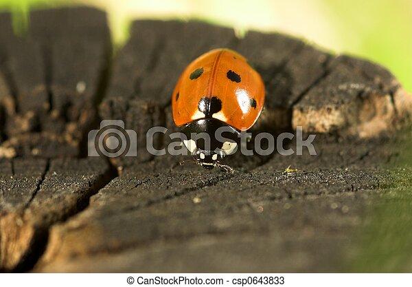 Ladybird on a Tree Stump - csp0643833