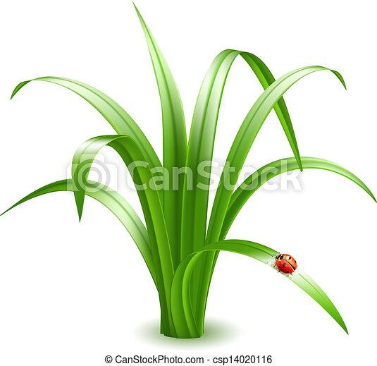 Ladybird on grass. Vector illustration. - csp14020116