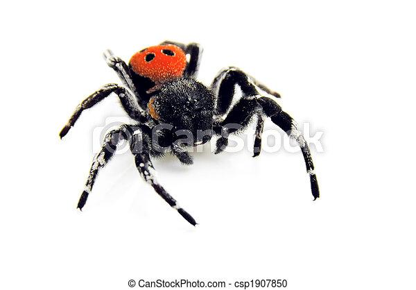 Ladybird Spider - creeping toward you! - csp1907850