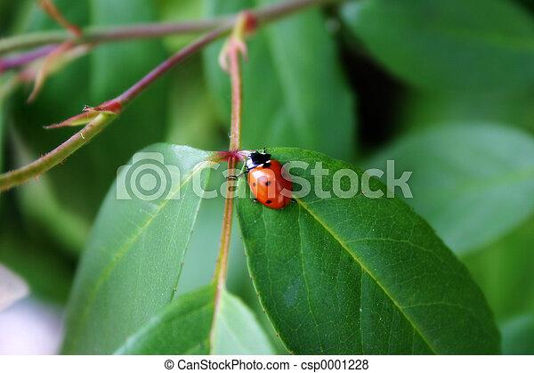 Ladybug 2 - csp0001228