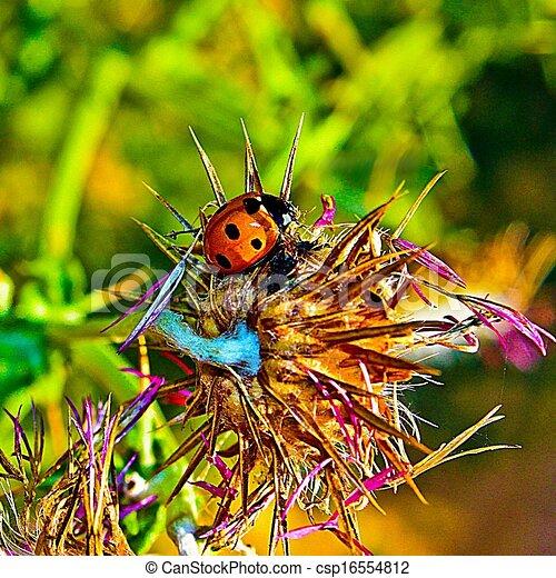 ladybug - csp16554812