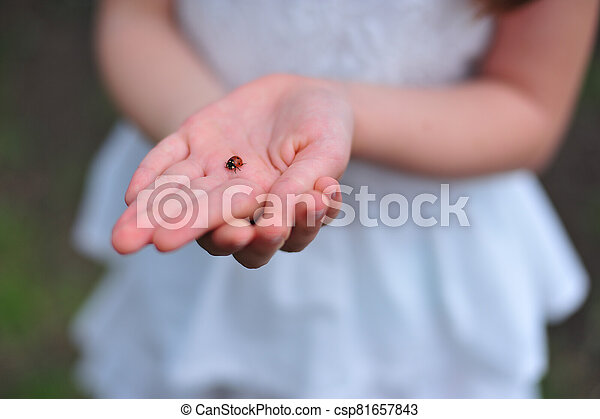 ladybug in the hands of a girl - csp81657843