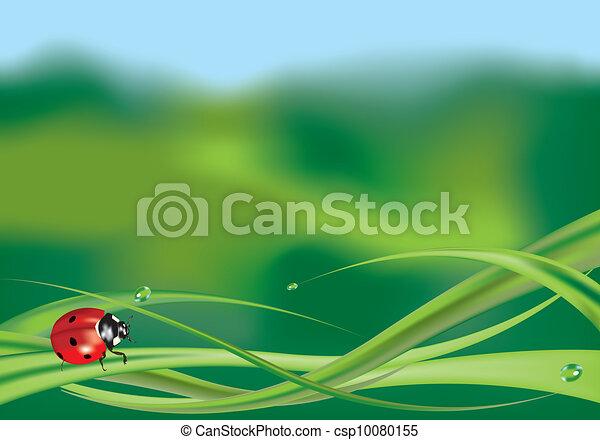 Ladybug on grass - csp10080155