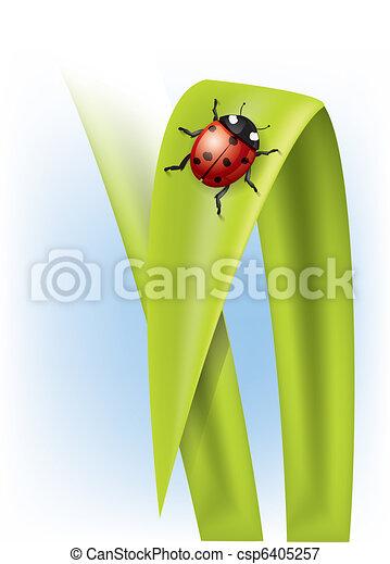 Ladybug on grass - csp6405257