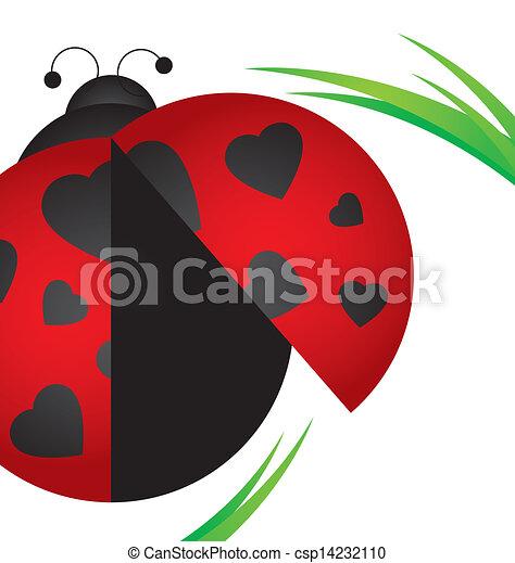 Ladybug on grass  - csp14232110