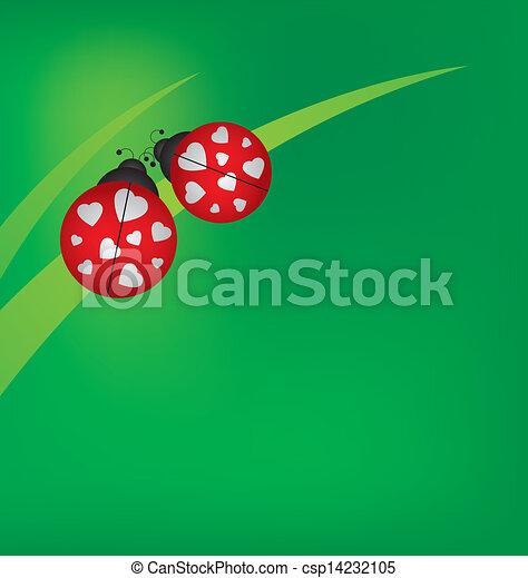 Ladybug on grass  - csp14232105