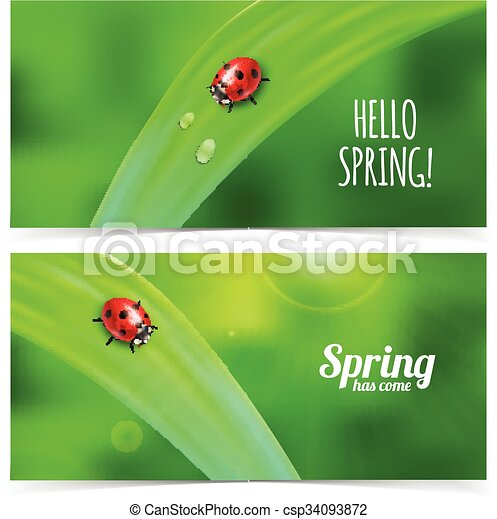 Ladybug on green grass. - csp34093872