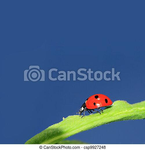ladybug on green herb under blue sky - csp9927248