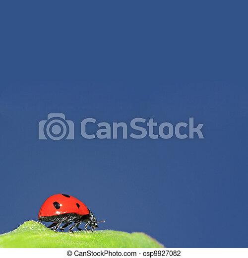 ladybug on green herb under blue sky - csp9927082