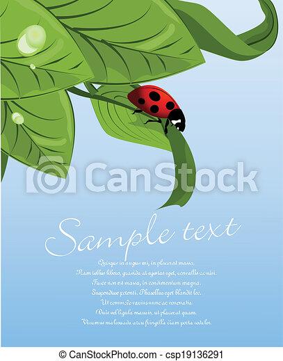 Ladybug on green leaf - csp19136291