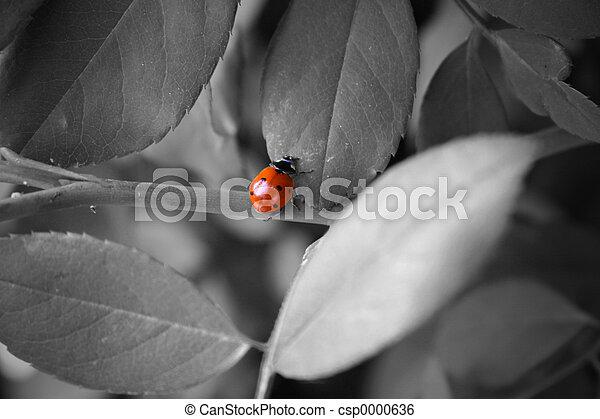 Ladybug - csp0000636