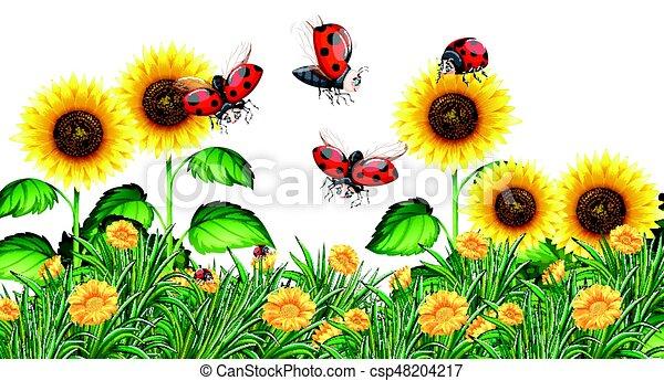 Sunflower Line Drawing : Ladybugs flying in sunflower garden illustration vector clip art