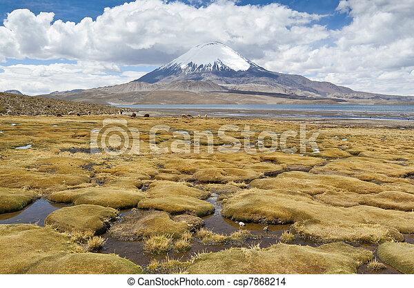 lago, chungara - csp7868214