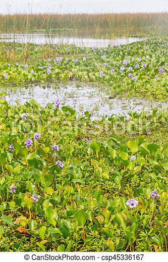 Lagoa dos Patos lake and vegetation - csp45336167