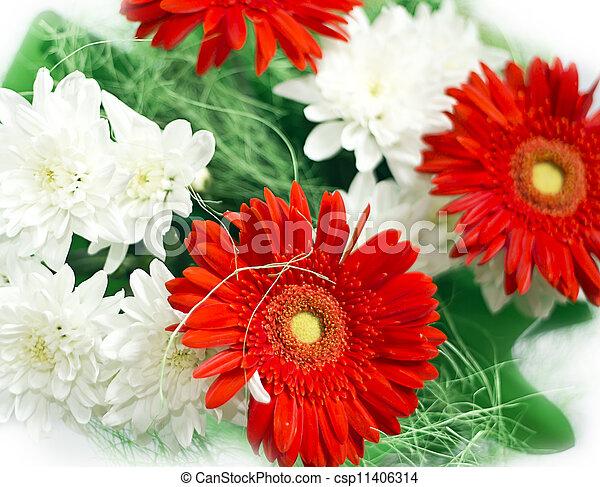 lakberendezési tárgyak, fénykép, zöld white, menstruáció, piros - csp11406314
