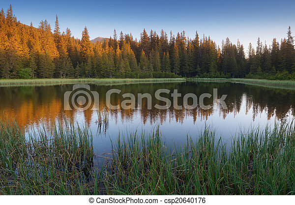 Lake in a mountain forest. Carpathians - csp20640176