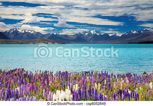 Lake Tekapo, New Zealand - csp6052849