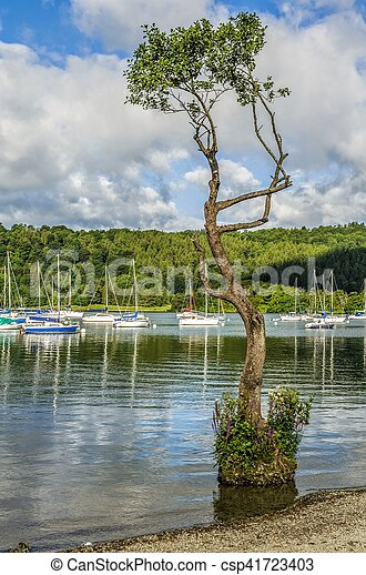 Yachts Moored On Lake Windermere At Bowness With A Spindly Tree