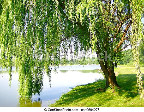 Lakeside Willow - csp0694275