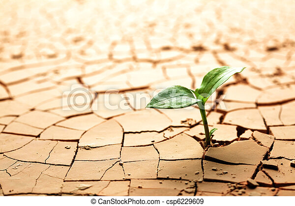 lama, planta, rachado, secado - csp6229609
