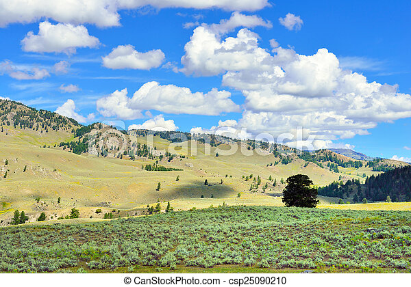 Lamar Valley in Yellowstone National Park, Wyoming in summer - csp25090210