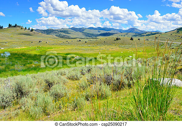 Lamar Valley in Yellowstone National Park, Wyoming in summer - csp25090217